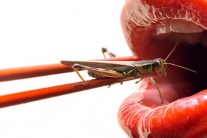 Got Crickets?  The New Protein Supplement