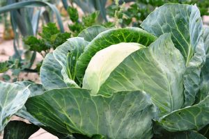 Cabbage Noodles and Other Ways Cabbage Can Rock Your Meals